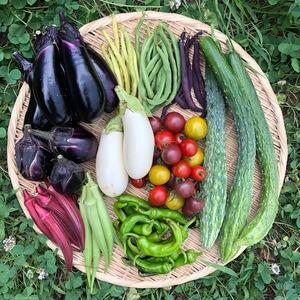 【自然栽培】季節の野菜セット (6-8品)