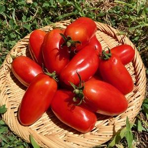 【自然栽培】加熱調理用トマト サンマルツァーノ  (1kg)