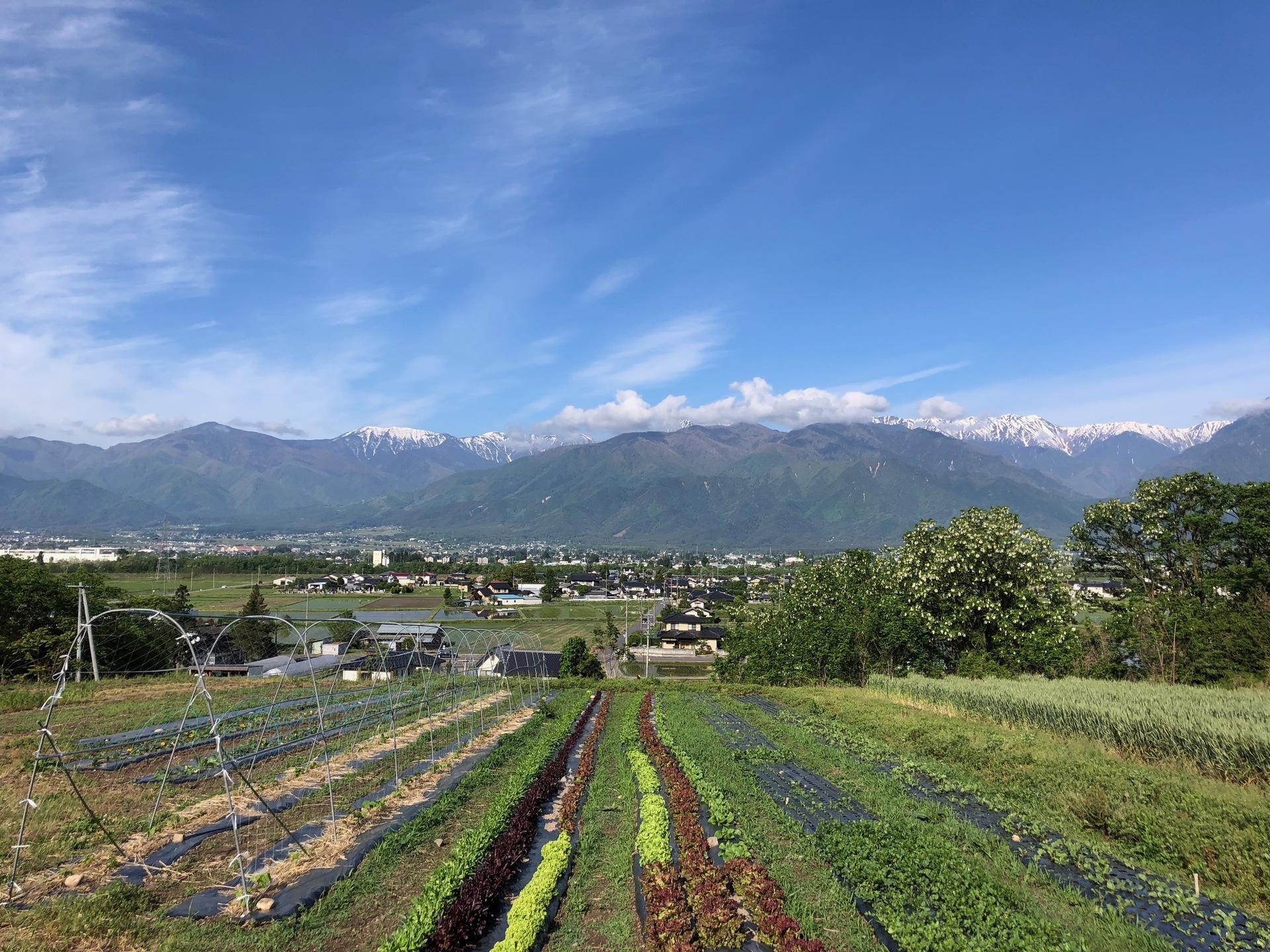 OKUDA ORGANIC FARMメイン画像