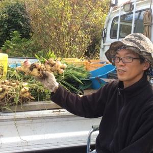 自然農法   無肥料不耕起栽培    新生姜  (1kg)