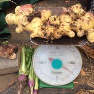 自然農法   無肥料不耕起栽培    新生姜   早出し限定30kg (1kg)