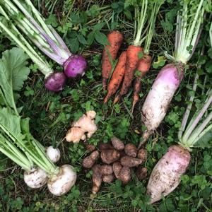 冬季限定、自然農法・自然栽培、お野菜セット。鹿児島県湧水町産
