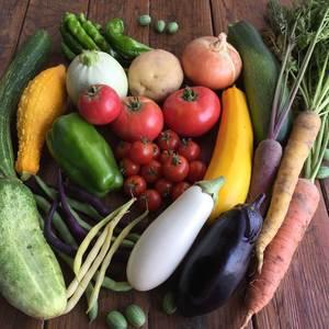 【農薬・肥料不使用】季節の旬野菜セット (S 6~8品)