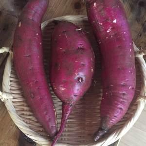 自然栽培さつまいも (シルクスイート500g・安納芋500g・紅はるか500g初回限定セット)