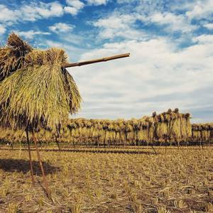 ヒノヒカリ玄米 29年度産 [自然栽培・天日干し米] (2kg)