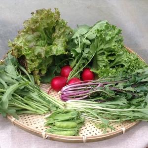 春のサラダ野菜 無農薬・無化学肥料 (6種類)