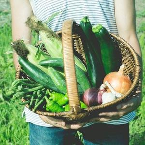 夏の果菜 無農薬・無化学肥料 (7-8種類)