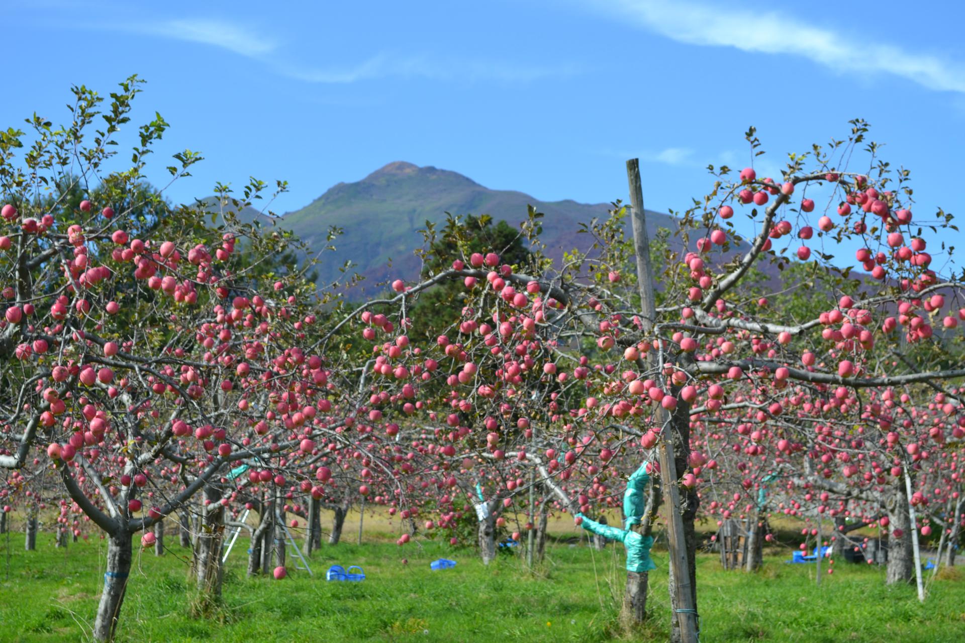 杉山自然栽培研究農園メイン画像