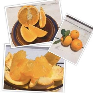 はっさく2キロ&ネーブルオレンジ1キロ 無農薬・無化学肥料・無除草剤 (八朔2キロとネーブルオレンジ1キロ)