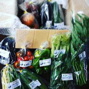 シードマイスターが作る無農薬季節の野菜セット  (Mサイズ)