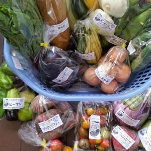 シードマイスターが作る無農薬季節の変わり野菜セット  (Mサイズ)