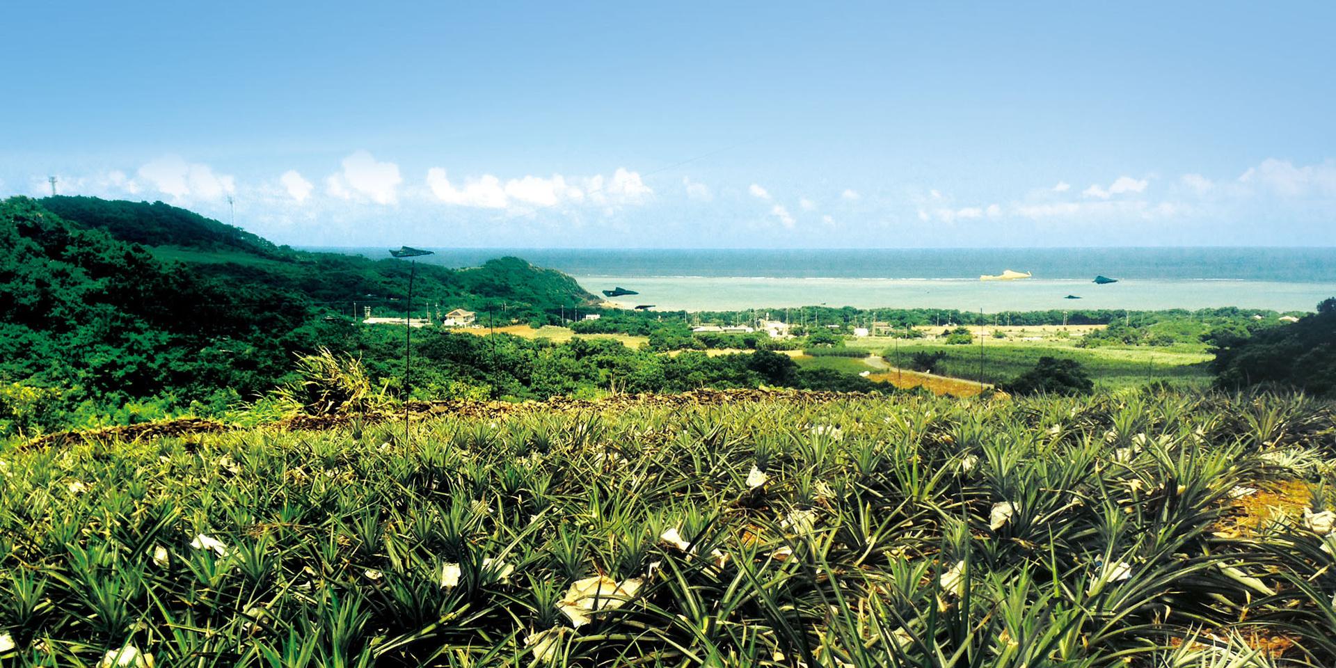 石垣島海のもの山のものメイン画像