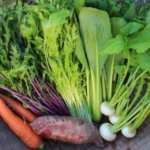 無農薬 露地野菜セット (Sサイズ)