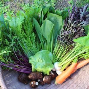 無農薬 露地野菜セット (Mサイズ)