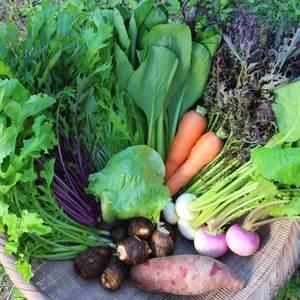 無農薬 露地野菜セット (Lサイズ)