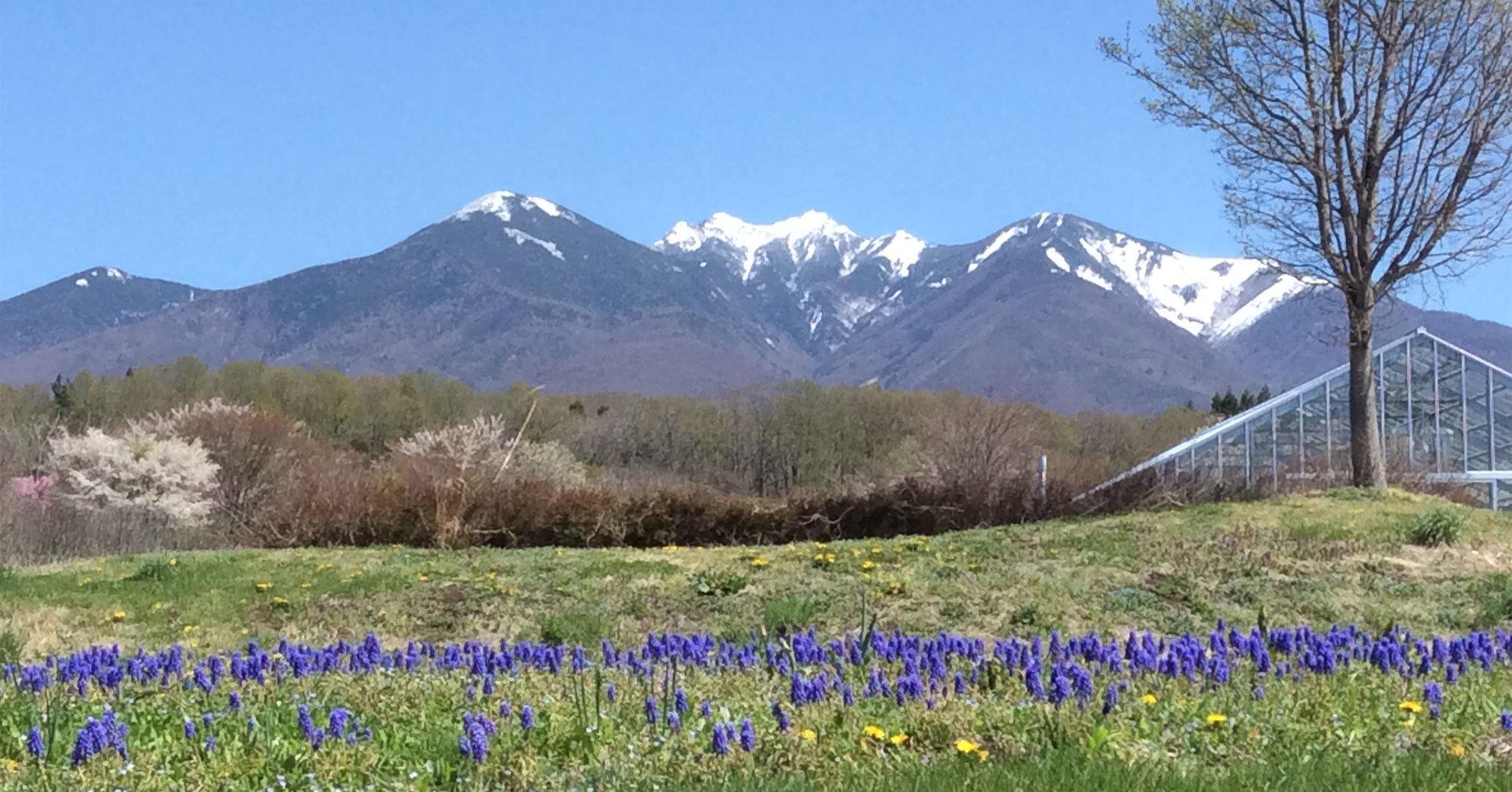 八ヶ岳の風メイン画像