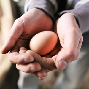 こだわりの平飼い卵 (20個)